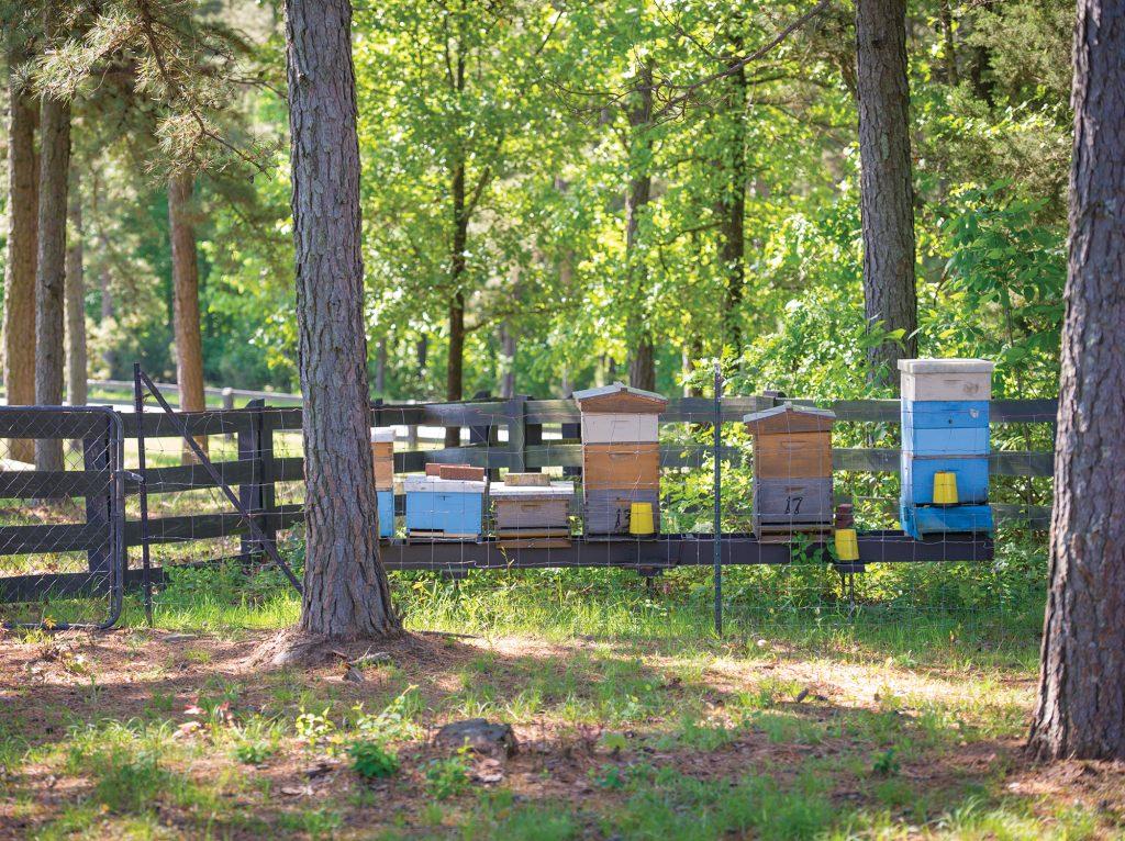 Honeybee hives at Moss Mountain Farm