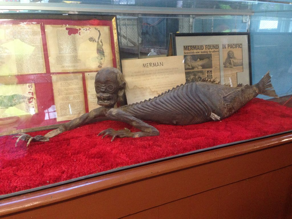 Mummified merman. Photo courtesy of Arkansas Alligator Farm and Petting Zoo