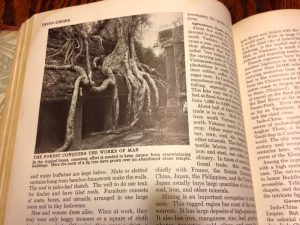 Photograph of the same tree in Compton's Pictured Encyclopedia.