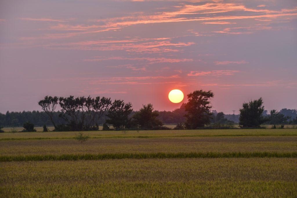 Rice Field in Grady, located in the Arkansas Delta