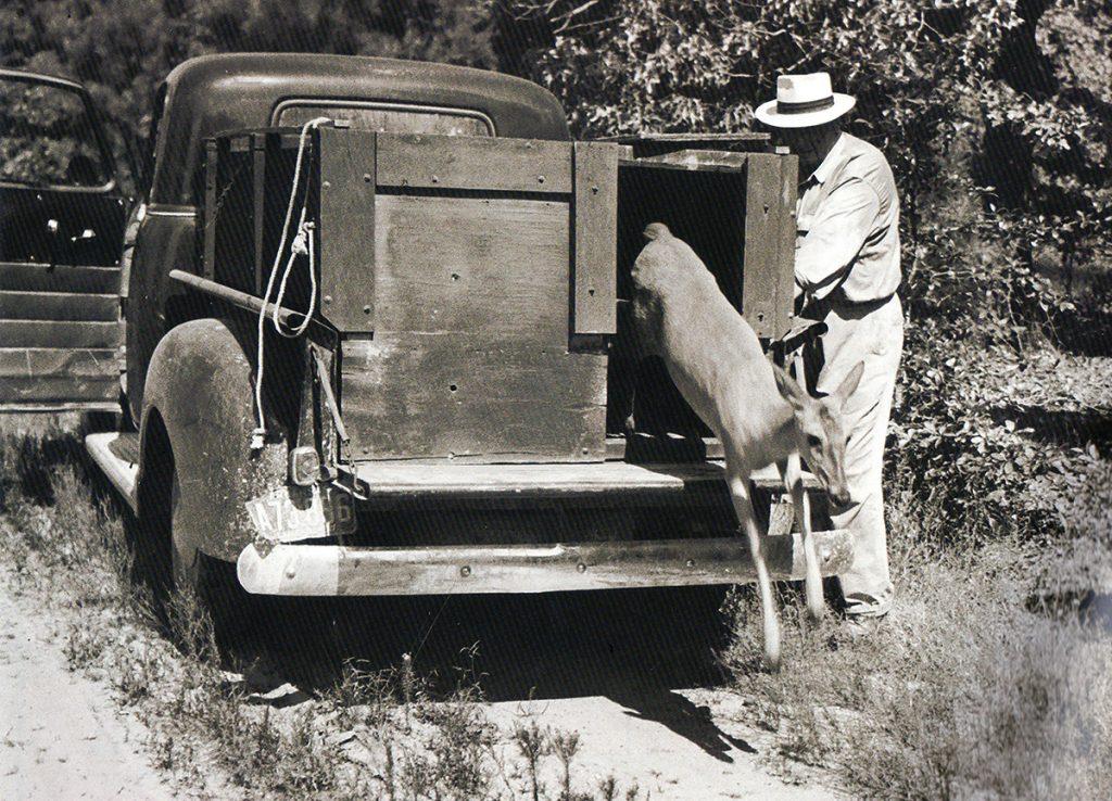 An early deer release.