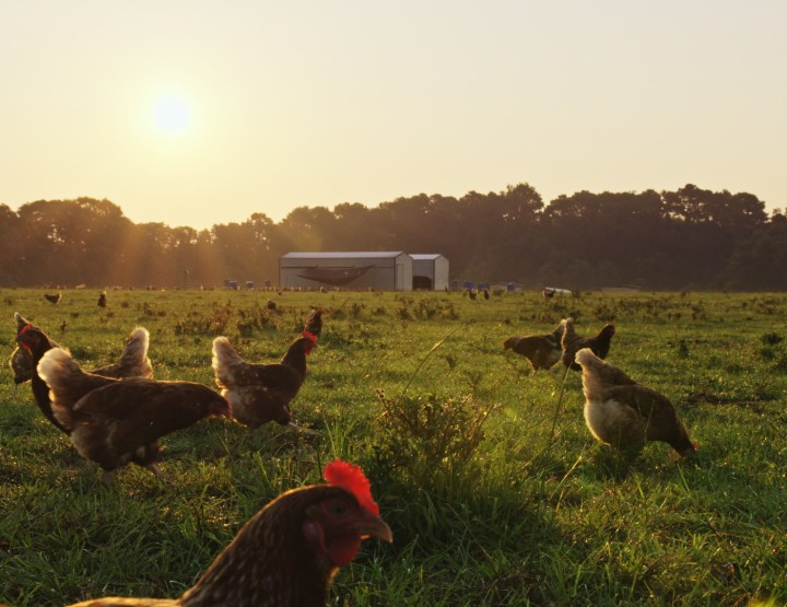 Whole Foods to bring food documentary to Little Rock