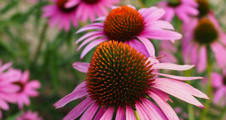 P. Allen Smith: Garden Maintenance