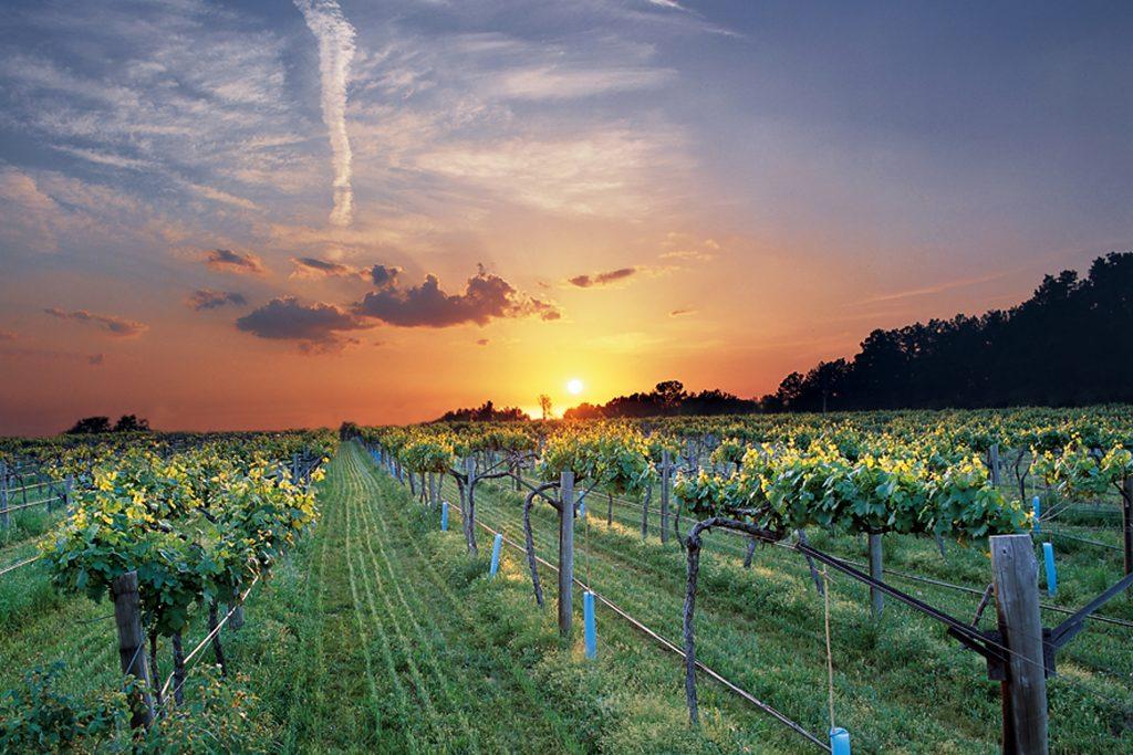 Vineyard in Altus Wine Country
