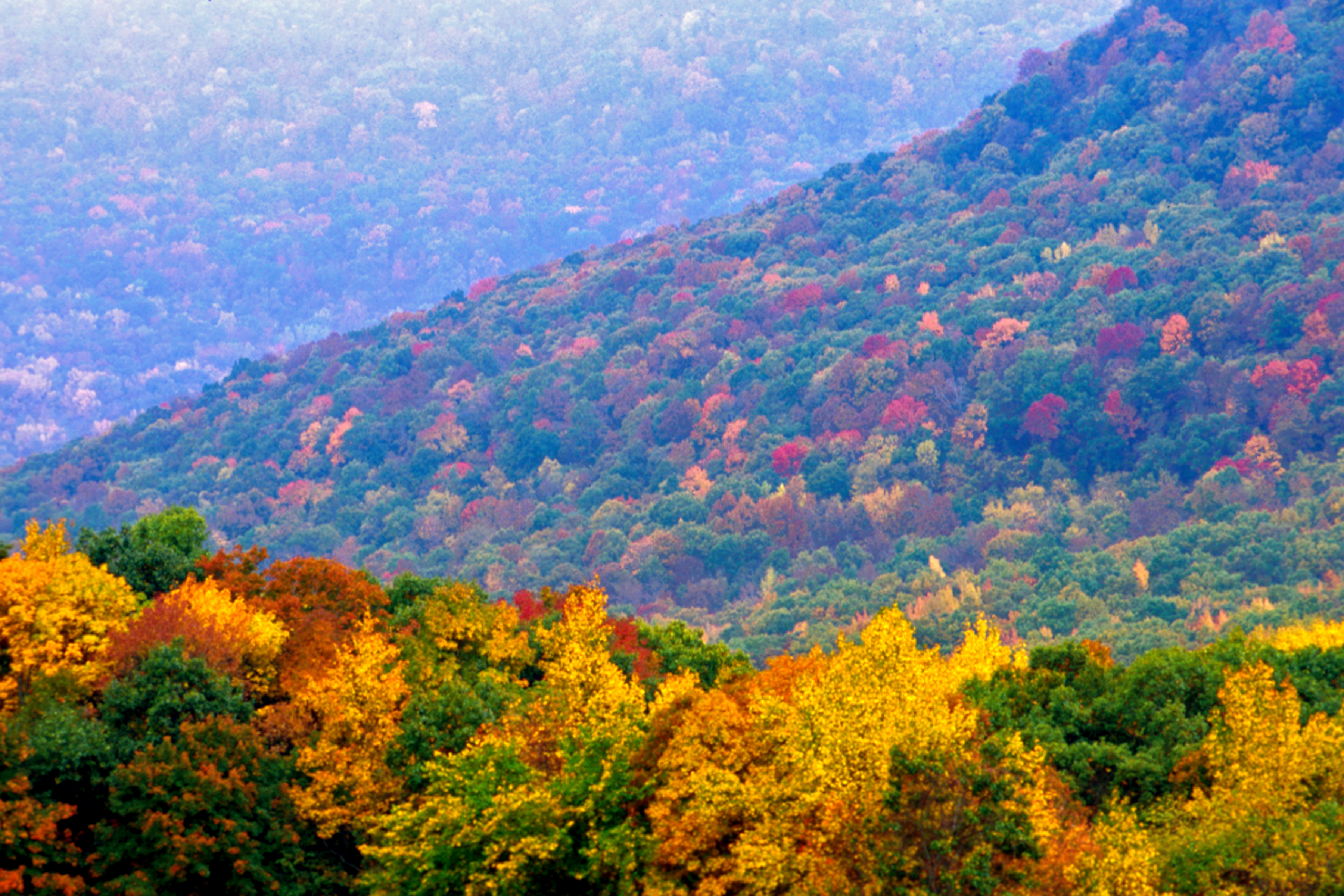 The Ouachita National Forest